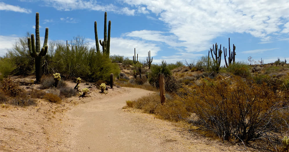 The Three Best Easy Hikes in Scottsdale Jane Rau