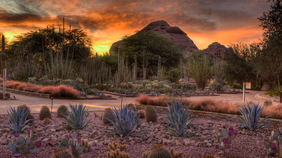 sunset in the garden - Desert Botanical Garden Phoenix