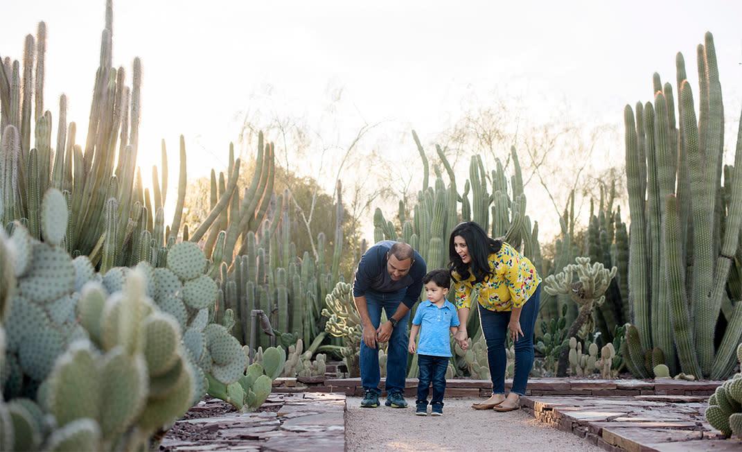 Desert Botanical Garden View