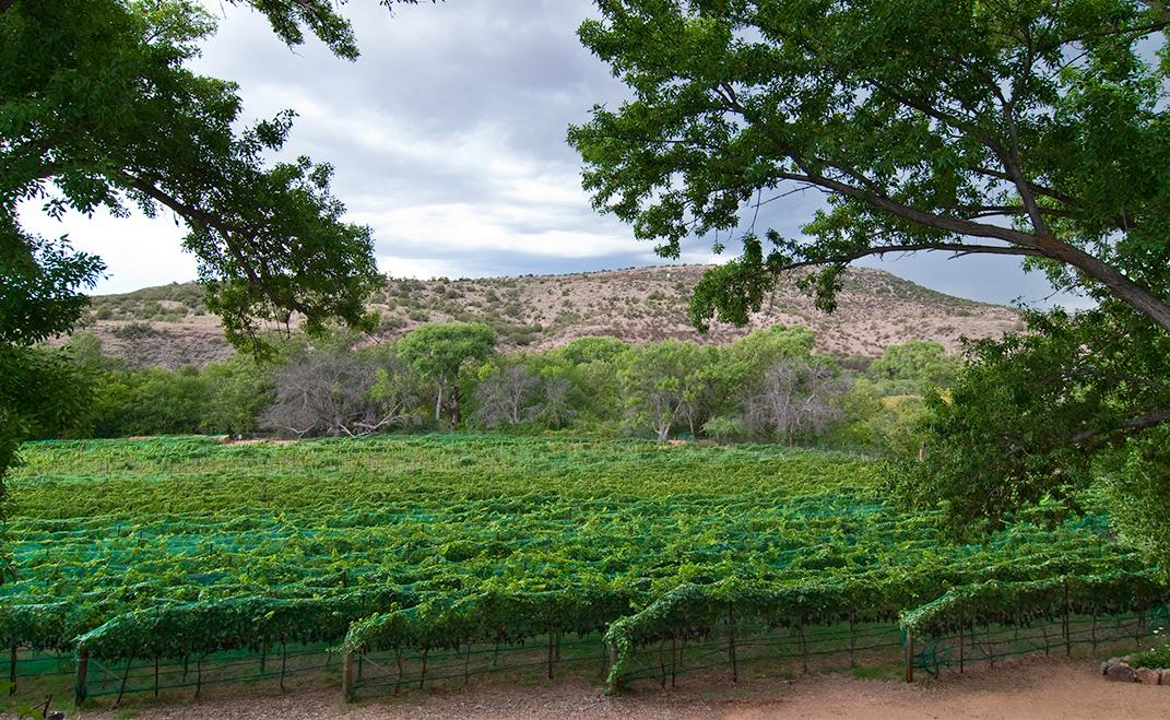 Verde Valley Vineyard