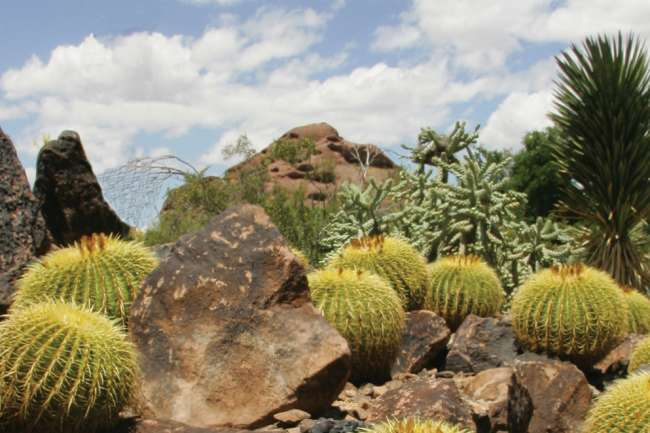 Edible Plants In The Arizona Desert In Scottsdale Official
