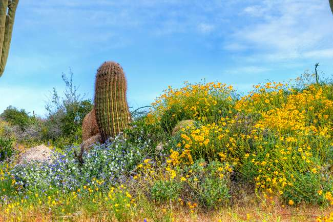Best Arizona Wildflower Hikes Drives Official Travel Site For Scottsdale Arizona