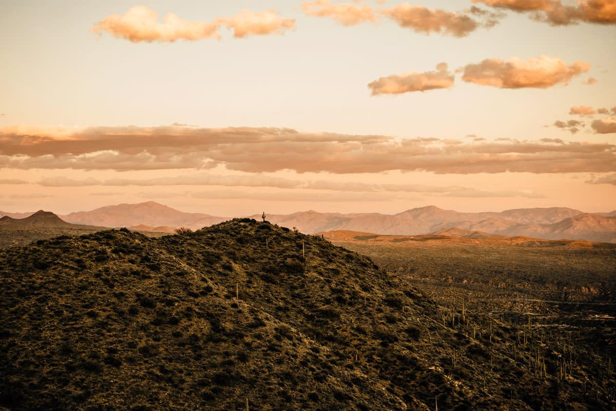 McDowell Sonoran Preserve_woods2