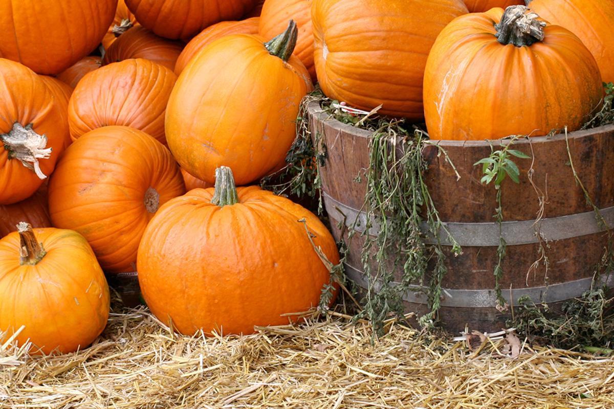 pumpkin patch header